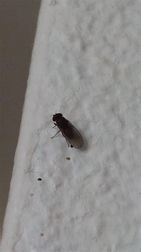 insectes cuisine d 39 insectes dans mon appart notre planete info