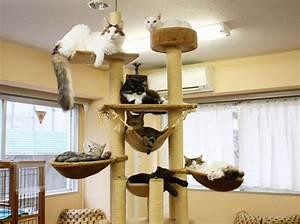 Arbre à Chat Fait Maison : en savoir un peu plus sur le premier caf des chats paris yummypets ~ Melissatoandfro.com Idées de Décoration