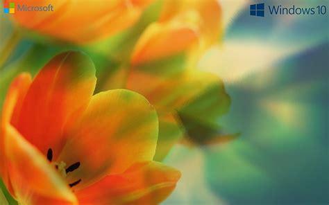 hd wallpaper landscape  bliss windows xp stock wallpaper flare