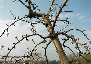 Apfelbaum Schneiden Anleitung : apfelbaum schneiden einfache tipps f r anf nger ~ Eleganceandgraceweddings.com Haus und Dekorationen