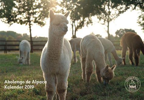 alpaka kalender abolengo de alpaca