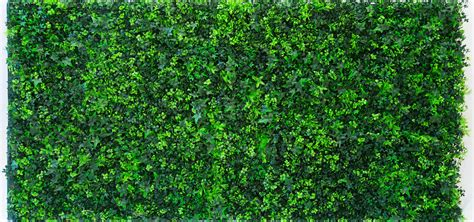wallpaper home interior artificial vertical garden green wall by evergreen trees