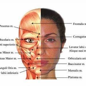 Acne Diagram Face