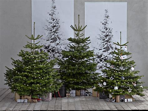 best care for real christmas tree 12 best real trees gifts extras the independent
