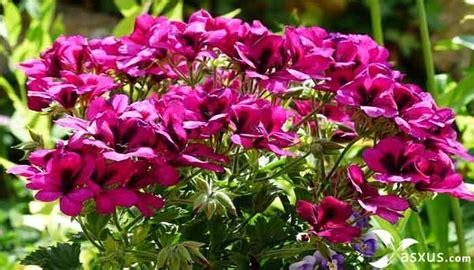 jenis tanaman hias bunga lengkap gambar