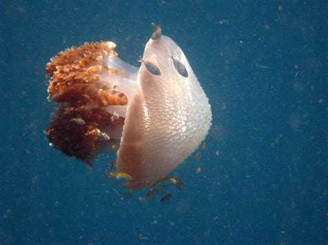 jellyfish thailand sting kind aboard local doesn