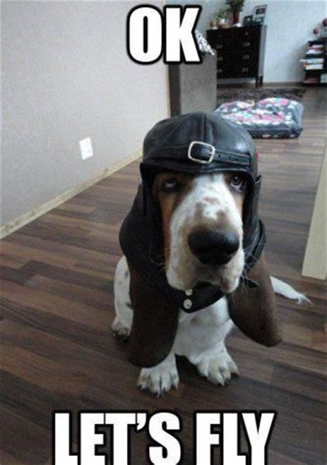 basset hound memes   time
