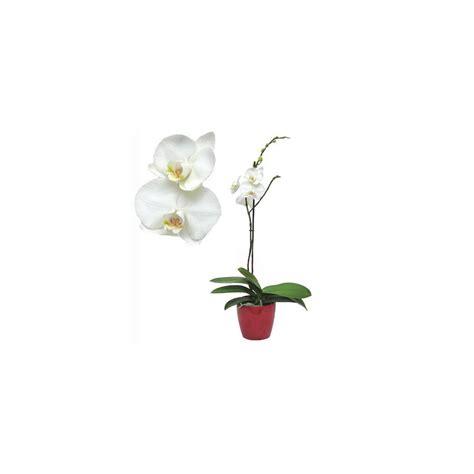 orchid 233 e phalaenopsis blanche en fleur cache pot plantes et jardins