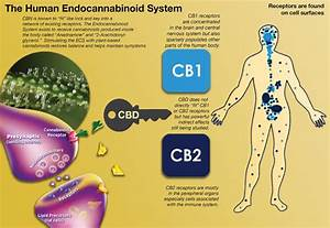 cbd research epilepsy