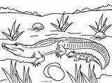 Coloring Pages Alligator Baby Crocodile Colouring Printable Picnic Cool2bkids Printables Table Template Reptiles Animal Getcolorings sketch template