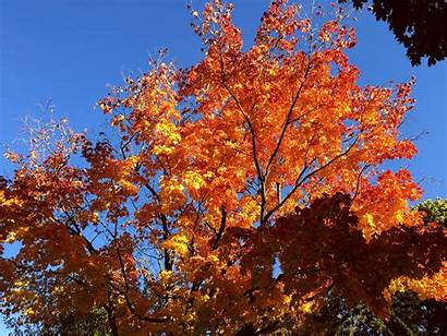 Leaves Fall Dancing Orange Animation Colours Its