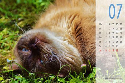 juli  kalenderblaetter hintergrundbilder kostenlos