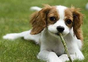 Different Cutest Dog Breeds with Pictures and Breed Profiles