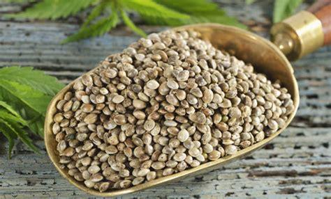 fare la farina  semi  cannabis associazione