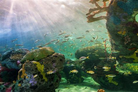 aquatic ecosystems  biodiversity global water institute