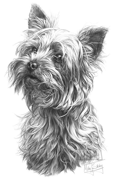 YORKSHIRE TERRIER fine art dog print by Mike Sibley