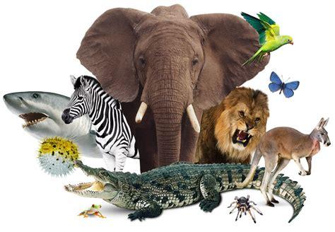 Unit 6 Animal World  Ins Roquetes
