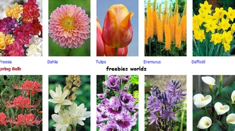 freebies worldz order free flower bulbs for your sweet