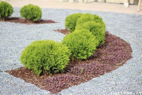 Priežu mizu mulča - tās nozīme dārza kopšanā - Gartens.lv