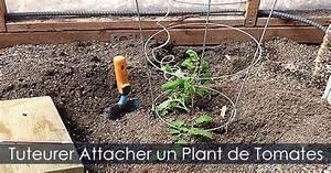 Comment Tuteurer Les Tomates : attacher un plant de tomates tuteur et ficelle pour ~ Melissatoandfro.com Idées de Décoration