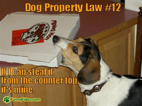 Law Dog Meme - 187 dog property law 12