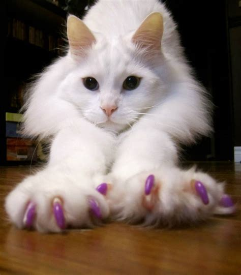 where can i declaw my cat for free