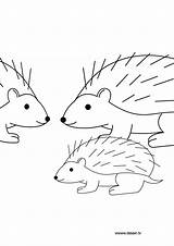 Hedgehog Coloring Pages Nazo Herisson Print Dessin Coloriage Shadic Animals Template sketch template