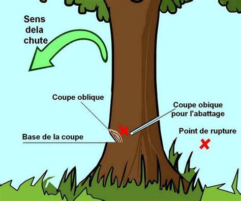 couper  arbre sans tronconneuse idees decoration