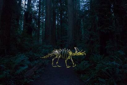 Redwoods Forest Winter Creek Giants California Animation
