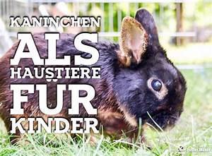Haustiere Für Kinder : kaninchen als haustiere f r kinder babyduda inempathie ~ Orissabook.com Haus und Dekorationen