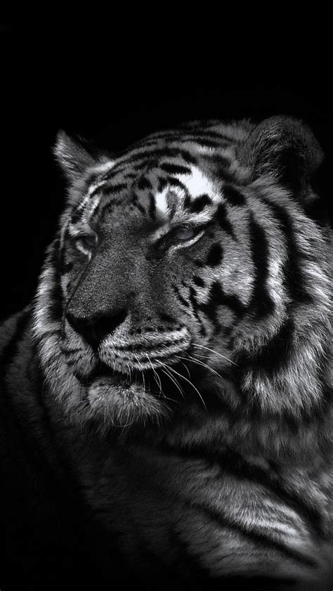 Animal Black And White Wallpaper - 31 best wallpapers images on iphone