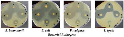biomedicines  full text indigenous probiotic
