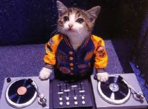 cat dj adopting a kitten or cat 171 advocates for animal rights afar