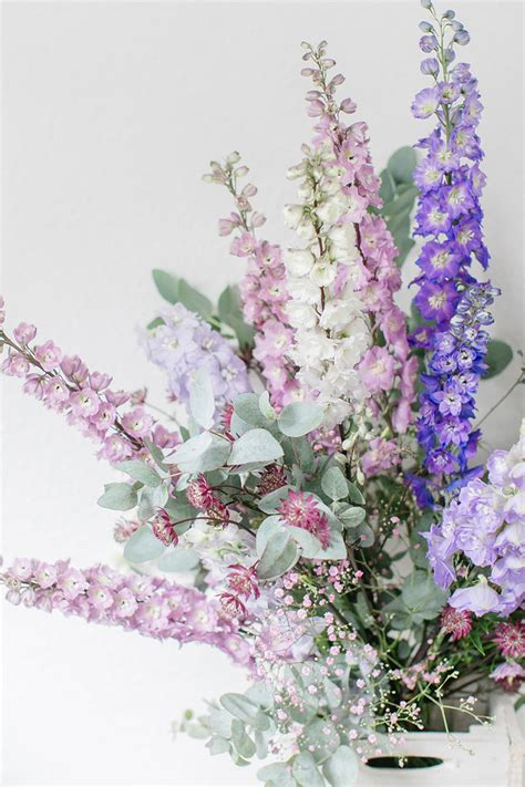 blaue blumen frühling hochzeitsblume rittersporn