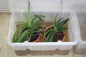 Orchidee Vanda Pflege : pflege kultur der vanda orchideen majas vanda ecke ~ Lizthompson.info Haus und Dekorationen