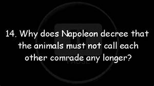 Animal Farm Revision  Napoleon U2019s Quiz