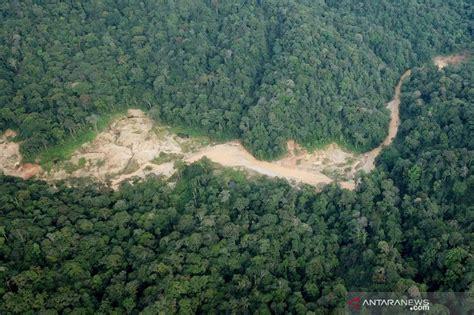 tambang emas ilegal  kawasan hutan lindung aceh barat