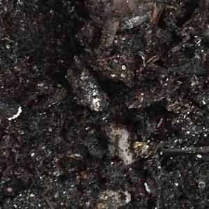 Kleine Mücken In Der Blumenerde : wei e tierchen und fliegen an meiner yuccapalme ~ Lizthompson.info Haus und Dekorationen