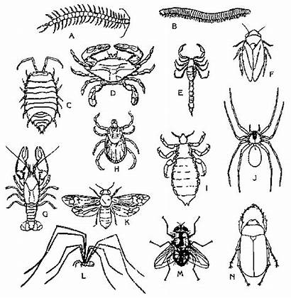 Insects Bugs Coloring Pages Drawing Control Animal