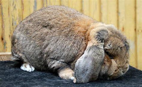 Coniglio In Gabbia - il coniglio con la gabbia sul balcone avvertenze e