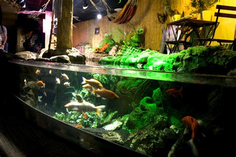 aquarium pour carpe koi aquarium trocadero parc loisirs cin 233 aqua bassin caresses carpes ko 239 esturgeons