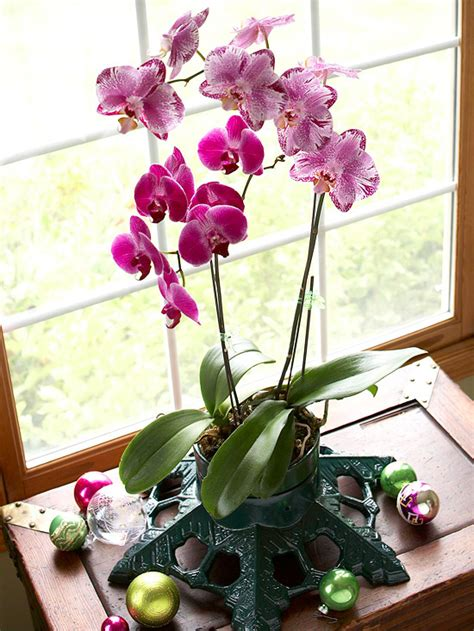 orchid care indoor how to grow orchids indoors
