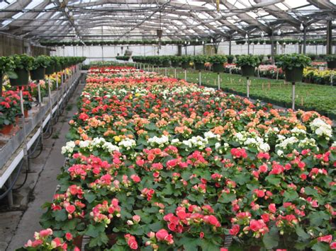 what is horticultural hort4050