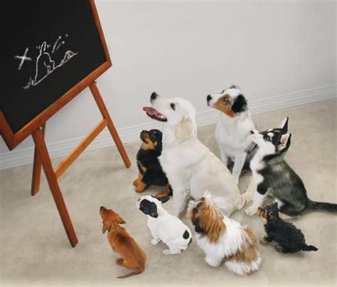het doel van puppycursus hondenwoordenboek