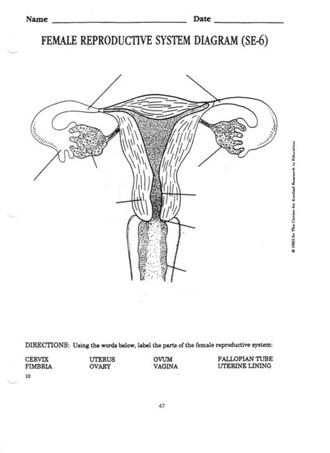 pin  agc  worksheets reproductive system female