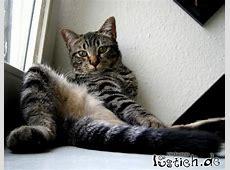 Coole Katze Bild lustichde