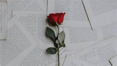 Aesthetic Romantic Desktop Books Background Wallpapers Rose