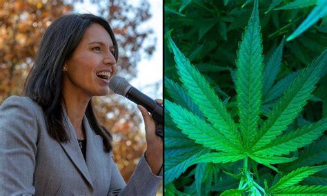 presidential candidate tulsi gabbard stands marijuana