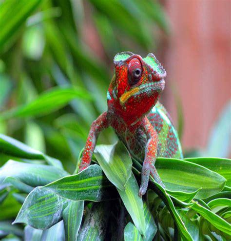 arts: Exotic lizards
