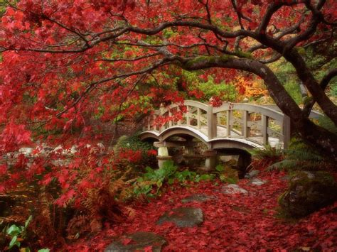Beautiful Autumn Garden by Beautiful Kyoto Gardens Japan World For Travel